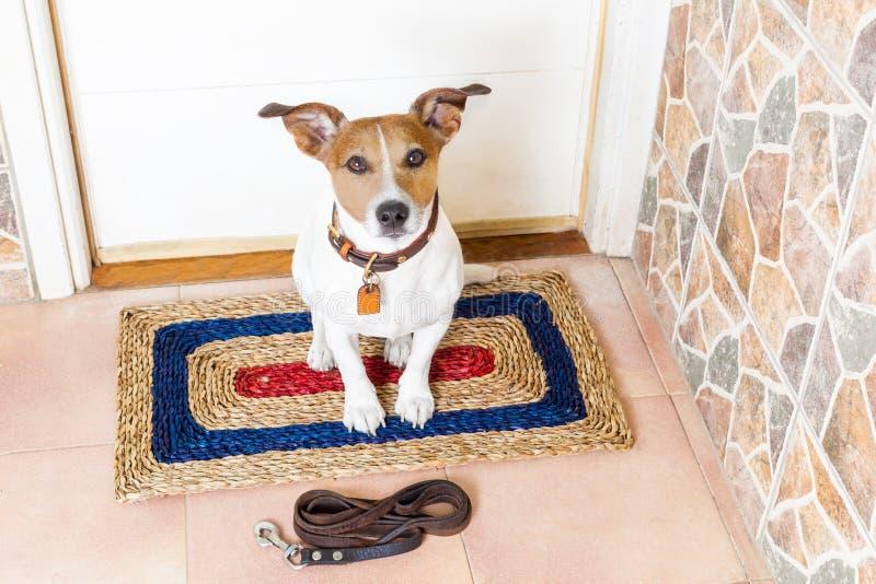Hond en eigenaar met leiband royalty-vrije stock foto's