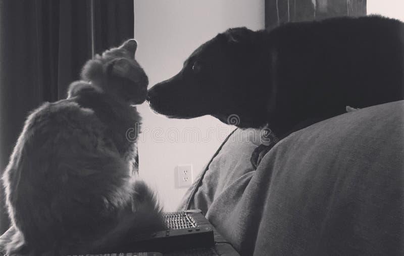 Hond en kat als beste vrienden royalty-vrije stock foto