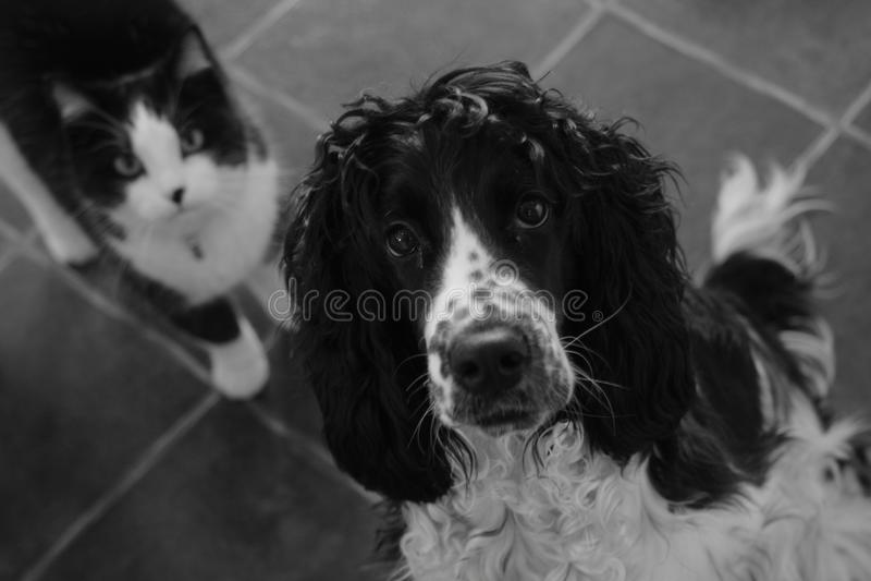 Hond en kat die camera bekijken royalty-vrije stock foto's
