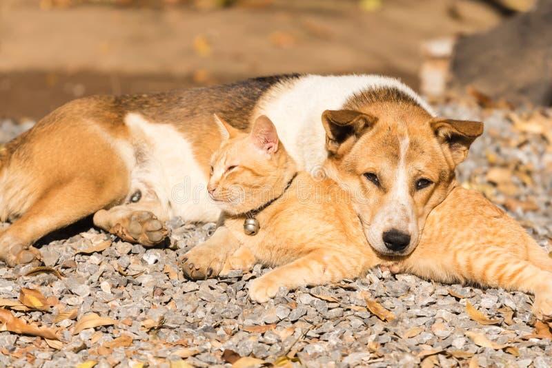 Hond en kat die samen liggen stock fotografie