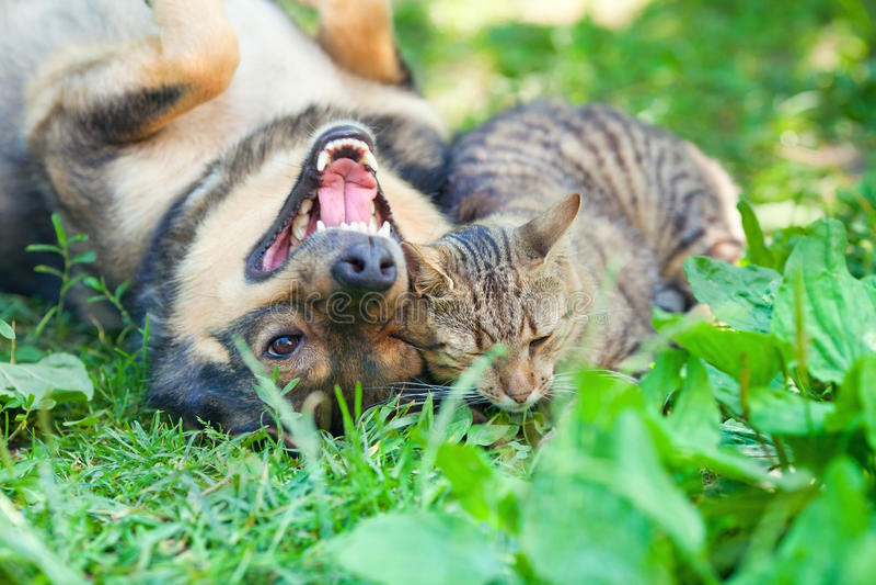Hond en kat die samen spelen stock foto's