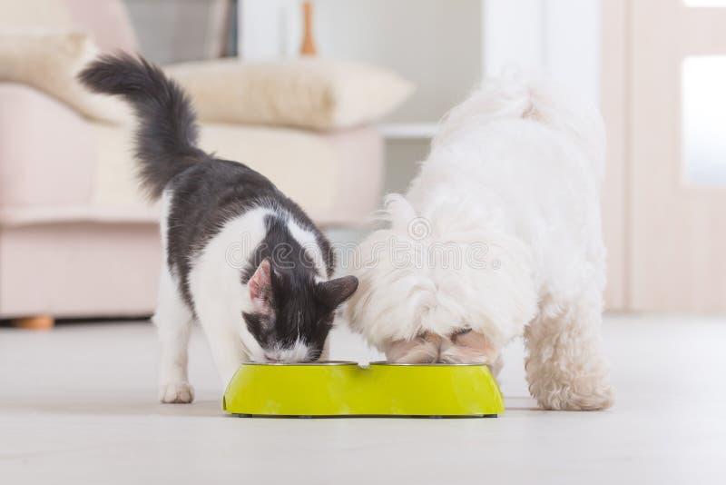 Hond en kat die voedsel van een kom eten royalty-vrije stock foto
