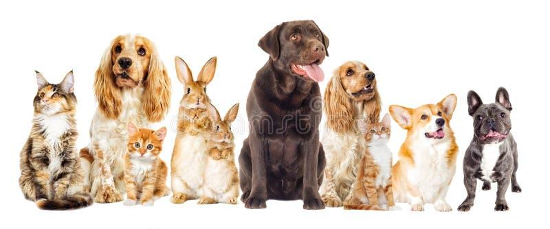 Hond en katje stock fotografie