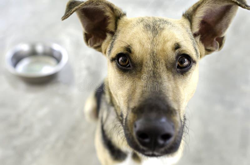 Hond en kom royalty-vrije stock afbeeldingen