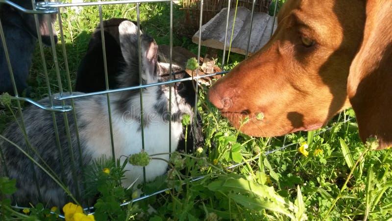 Hond en konijntje royalty-vrije stock afbeelding