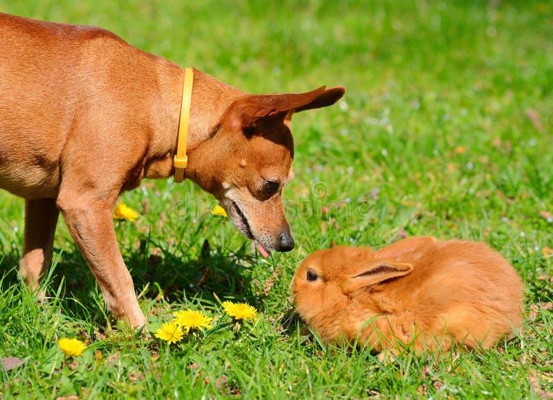 Hond en konijntje in de weide stock foto