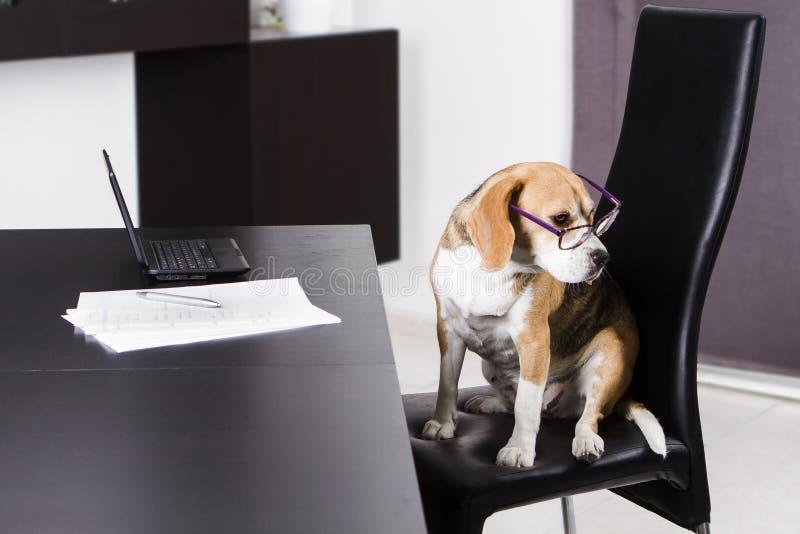 Hond en laptop royalty-vrije stock afbeeldingen