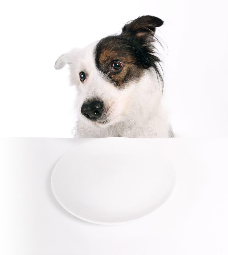 Hond en lege plaat royalty-vrije stock afbeelding