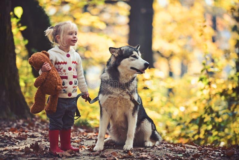 Hond en meisje bij de herfst boshond schor met kind op verse lucht openlucht royalty-vrije stock afbeeldingen
