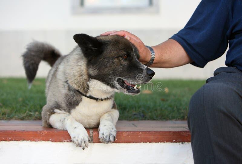 Hond en mens royalty-vrije stock foto's