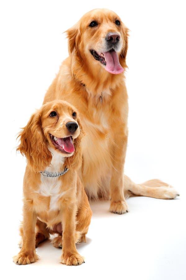 Hond En Puppy Stock Foto's