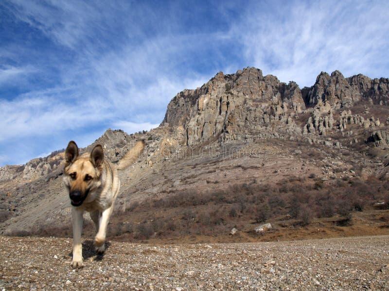 Hond en rotsen royalty-vrije stock fotografie