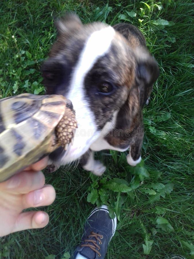 Hond en schildpad stock fotografie