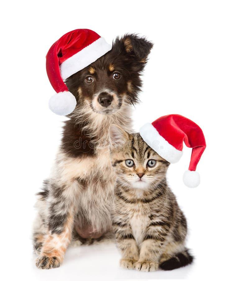 Hond en Schots katje met rode Kerstmishoeden die camera bekijken Geïsoleerdj op witte achtergrond royalty-vrije stock foto's