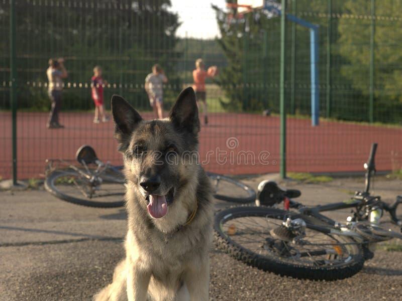 Hond en Speelkinderen stock foto