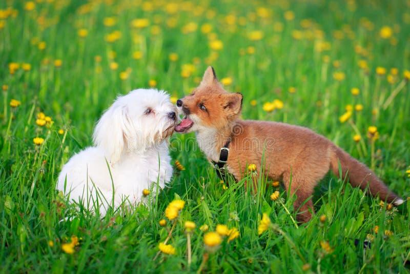 Hond en vos royalty-vrije stock afbeelding