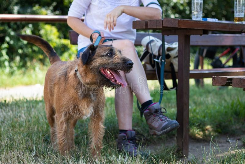 Hond en vrouw die in openluchtrestaurant rusten stock afbeelding