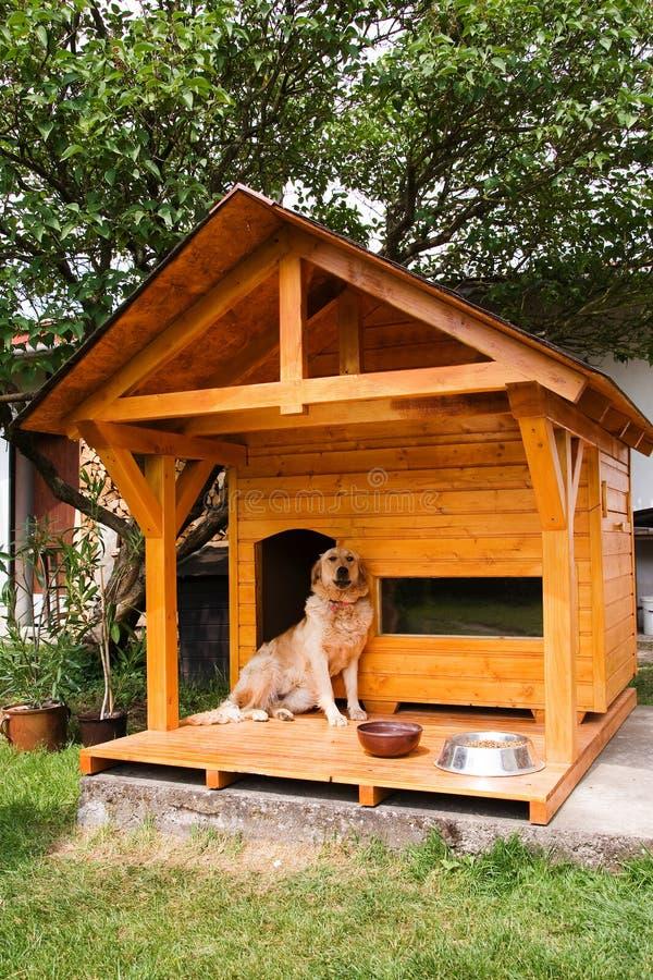 Hond en zijn nieuwe kennel stock afbeelding