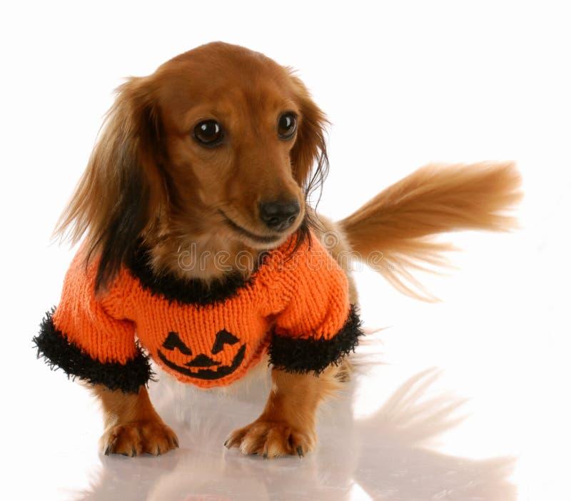 Hond gekleed voor Halloween stock afbeelding