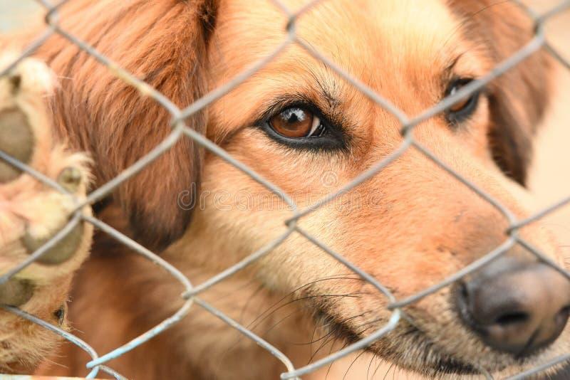 Hond in gevangenis royalty-vrije stock afbeelding