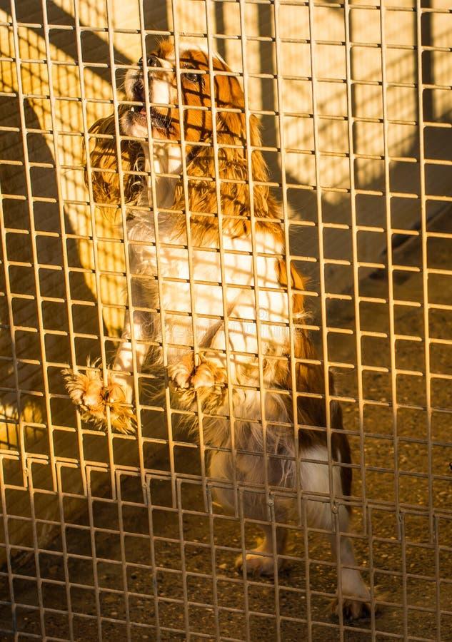 Hond in gevangenschap. stock foto's
