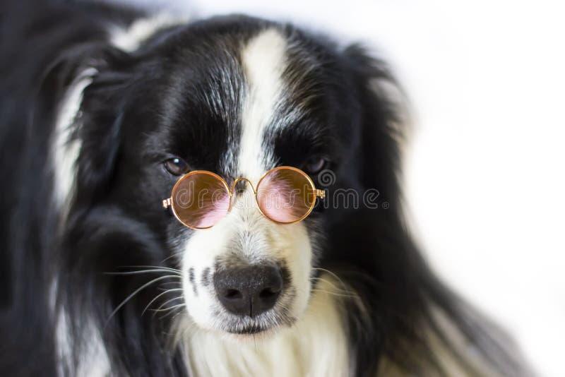 Hond in glazen stock foto's