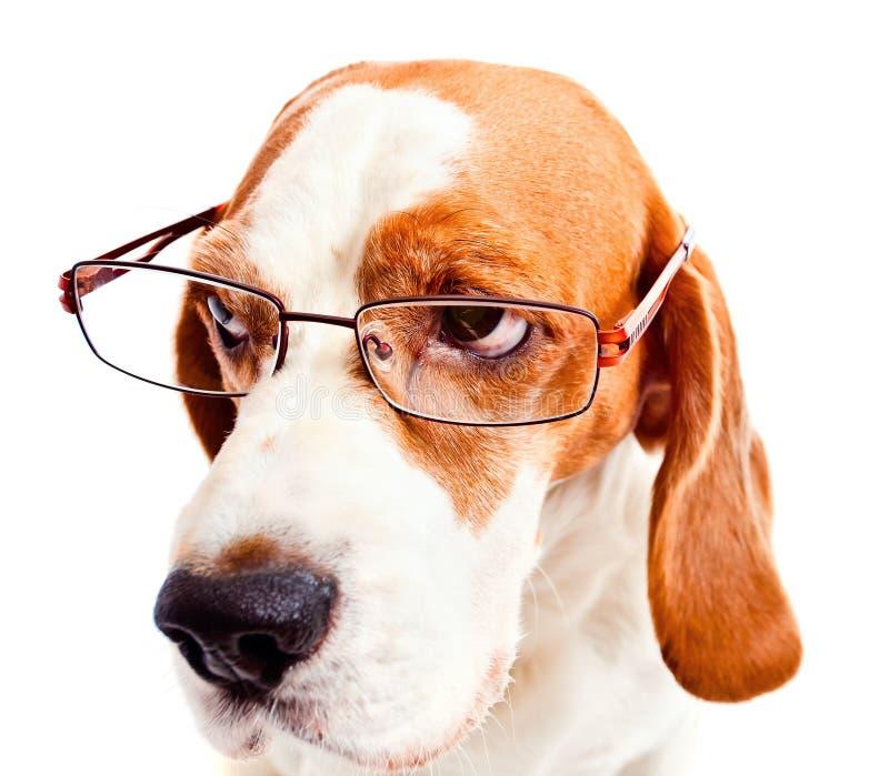 Hond in glazen royalty-vrije stock afbeeldingen
