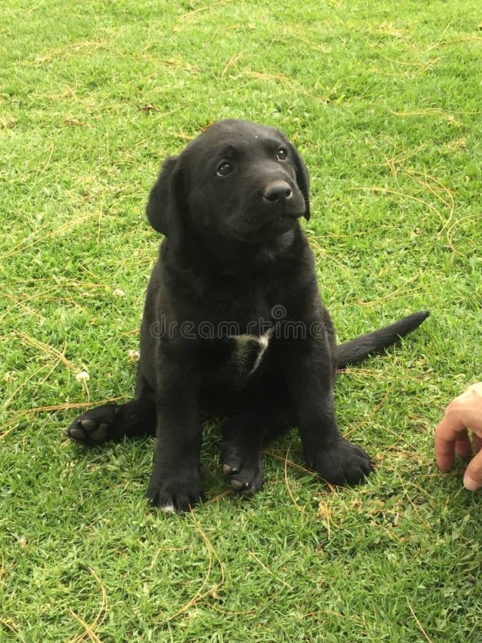 Hond in goedkeuring royalty-vrije stock afbeeldingen