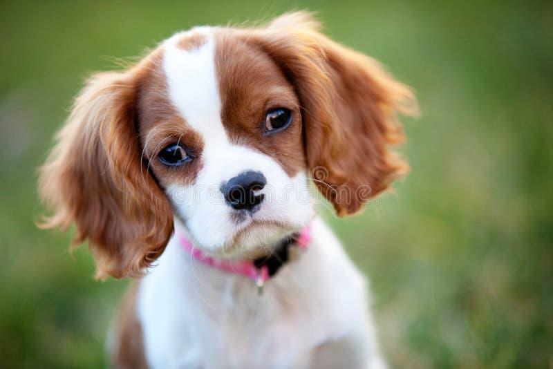 Hond in Gras stock foto's