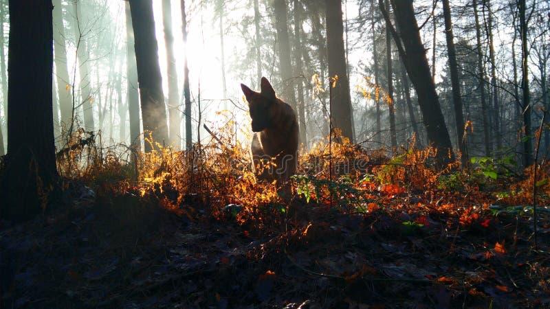Hond in het bos royalty-vrije stock afbeelding