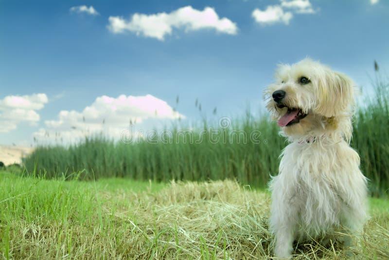 hond in het gras stock foto's