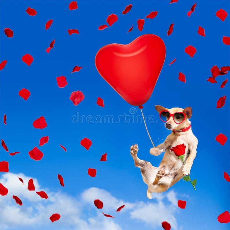Hond het hangen op ballon in lucht voor valentijnskaartendag royalty-vrije stock afbeeldingen