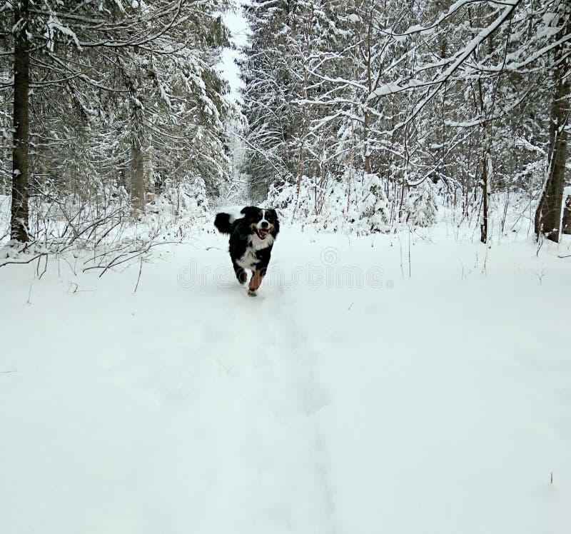 Hond in het hout royalty-vrije stock afbeelding