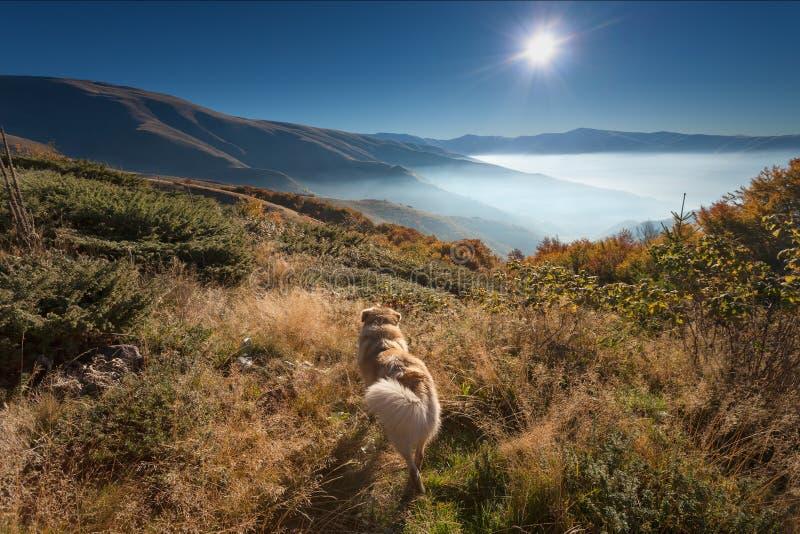 Hond het letten op in de zon bij dageraad royalty-vrije stock afbeelding