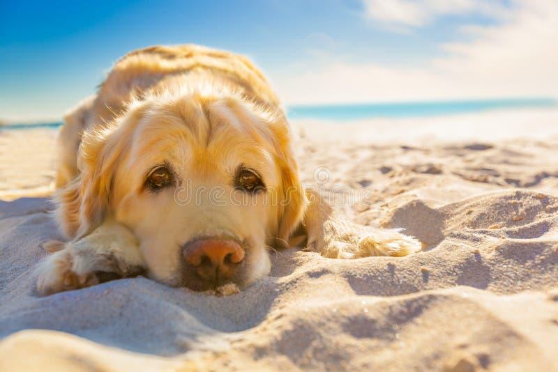 Hond het ontspannen royalty-vrije stock fotografie