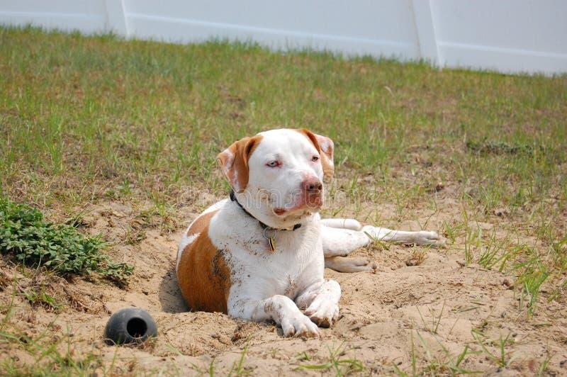 Hond het ontspannen in zand stock afbeelding