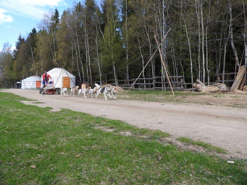 Hond het sledding in de zomer in het Park, Zonnige dag royalty-vrije stock foto's