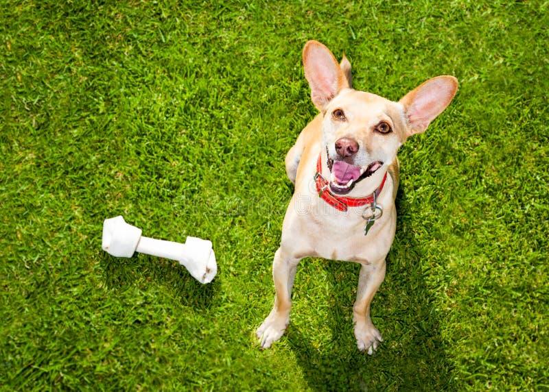 Hond het spelen met stuk speelgoed of been royalty-vrije stock afbeelding