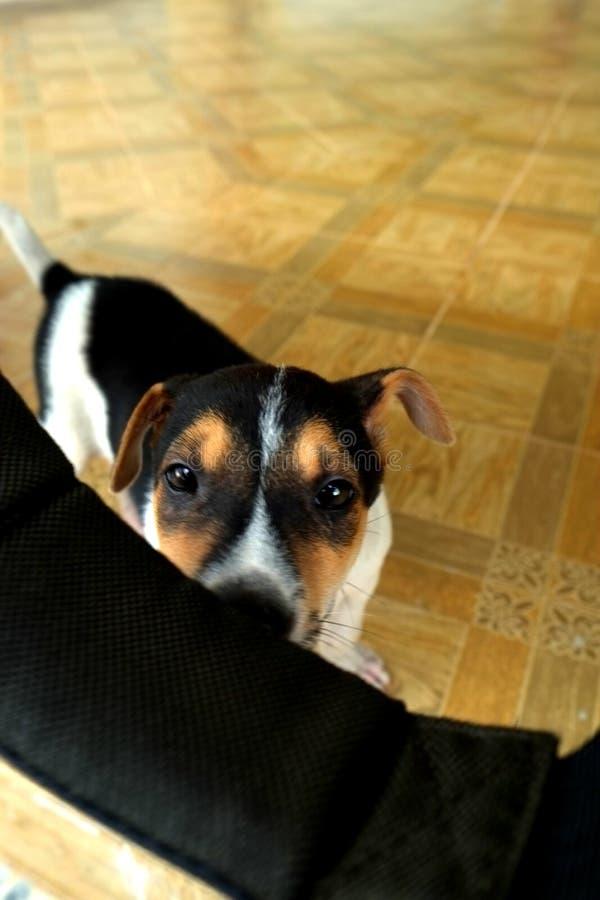 Hond het Verbergen achter de Richel royalty-vrije stock afbeelding