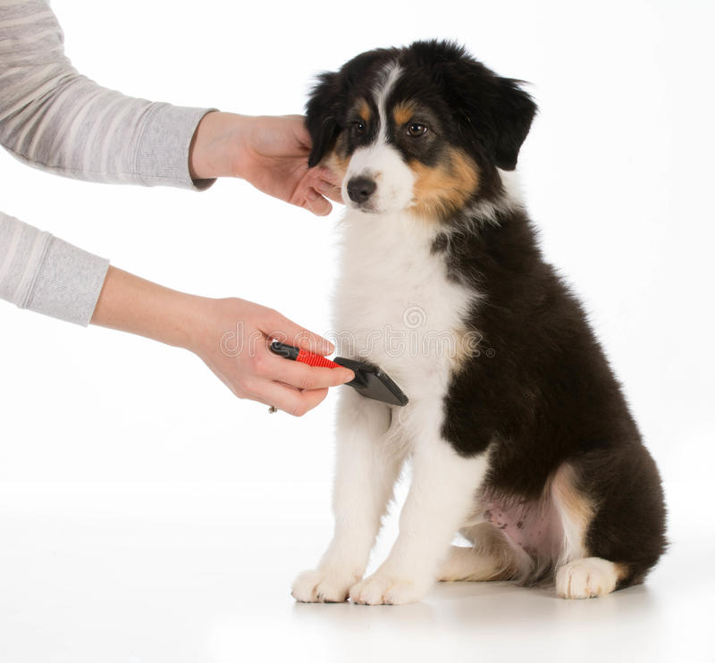 Hond het verzorgen royalty-vrije stock afbeeldingen