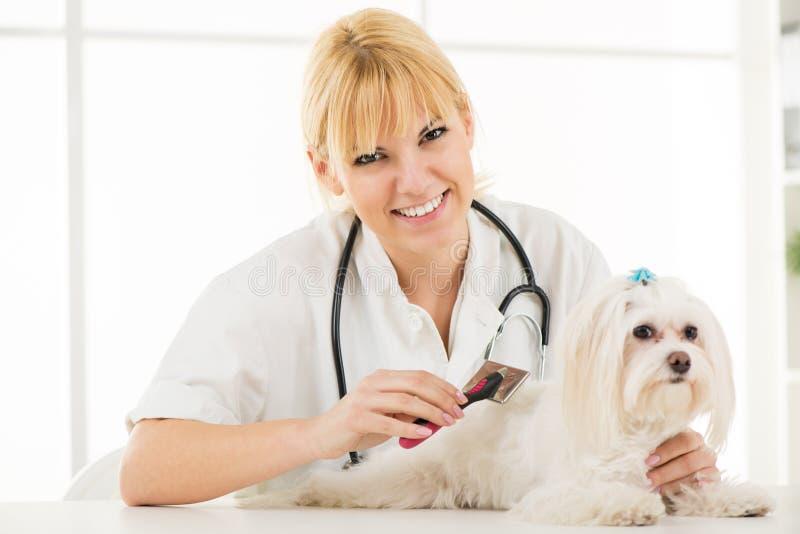 Hond het Verzorgen stock fotografie