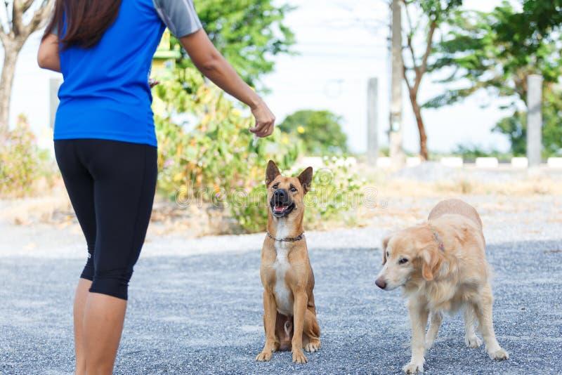Hond het voeden opleiding stock foto