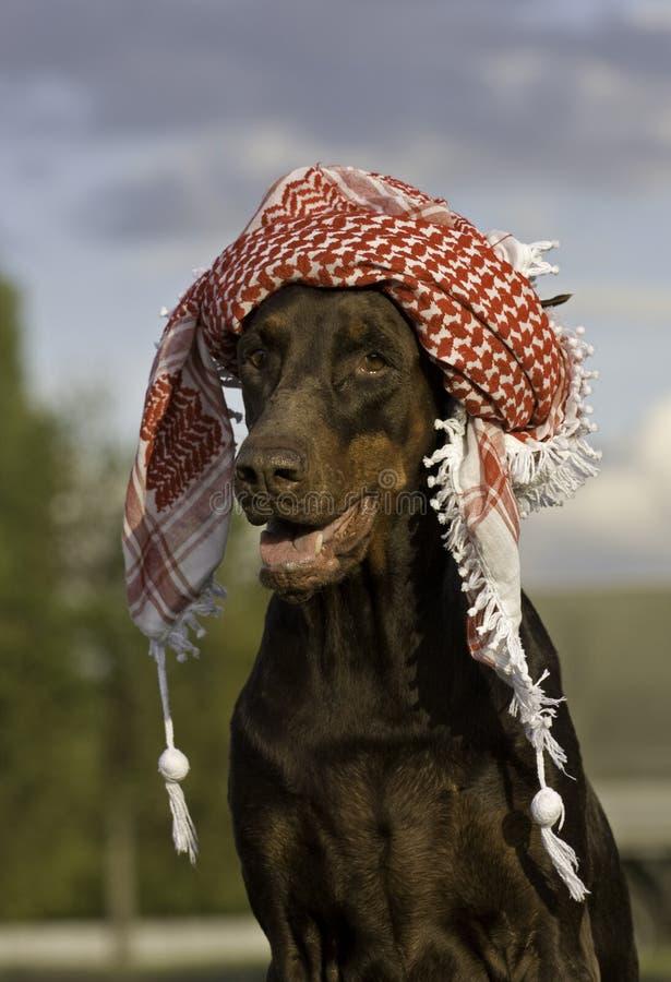 Hond in hoed stock foto's