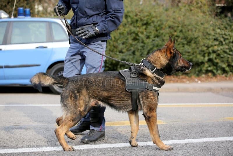 Hond Hondseenheid van de politie om te identificeren de explosieven tijdens royalty-vrije stock fotografie