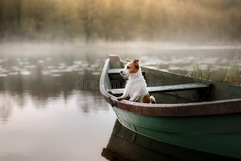 Hond Jack Russell Terrier in een boot stock afbeelding