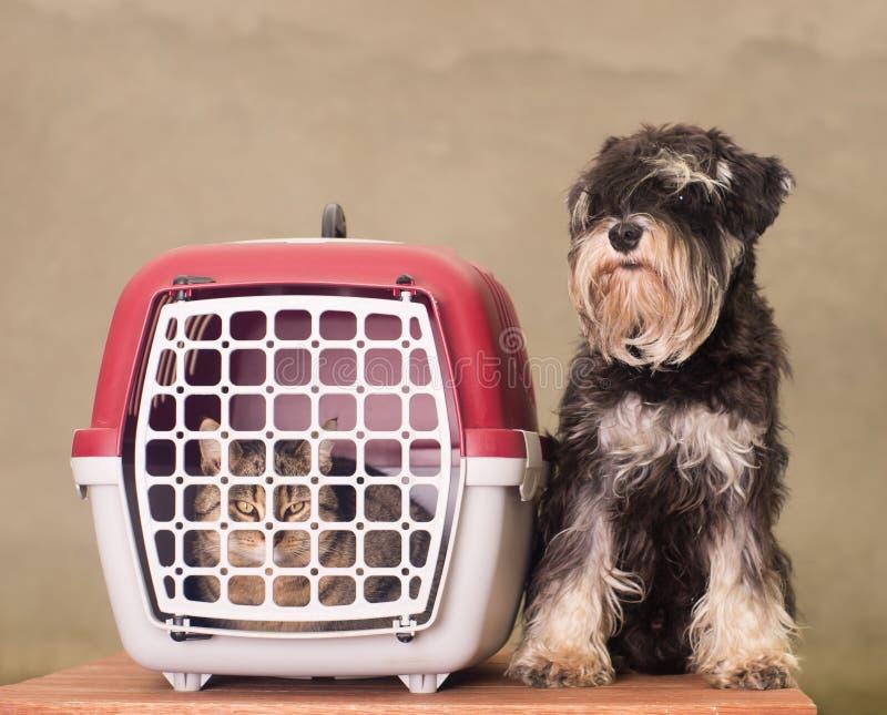 Hond, katten en huisdierendrager royalty-vrije stock afbeelding