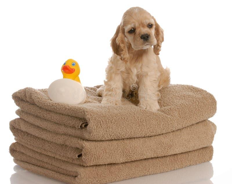 Hond klaar voor een bad royalty-vrije stock afbeeldingen
