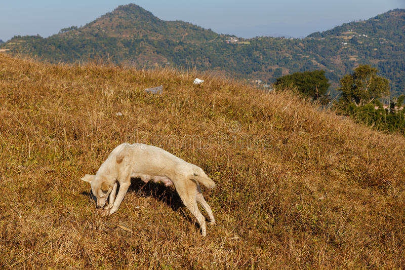 Hond knagend aan been op gras royalty-vrije stock foto's