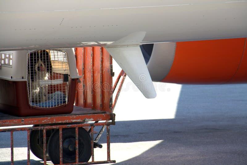 Hond in kooi   stock foto's