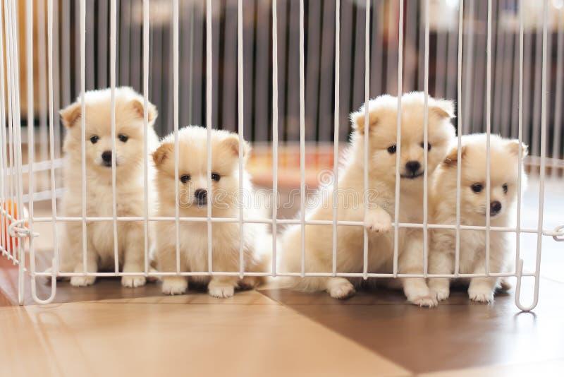 Hond in Kooi royalty-vrije stock foto's